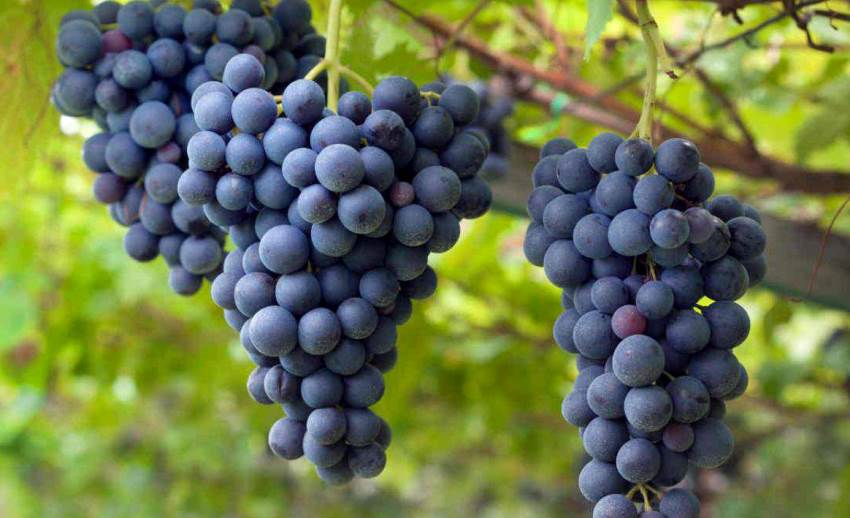 Post Covid, vino