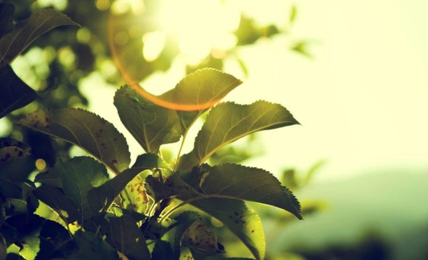 Lazio, green economy