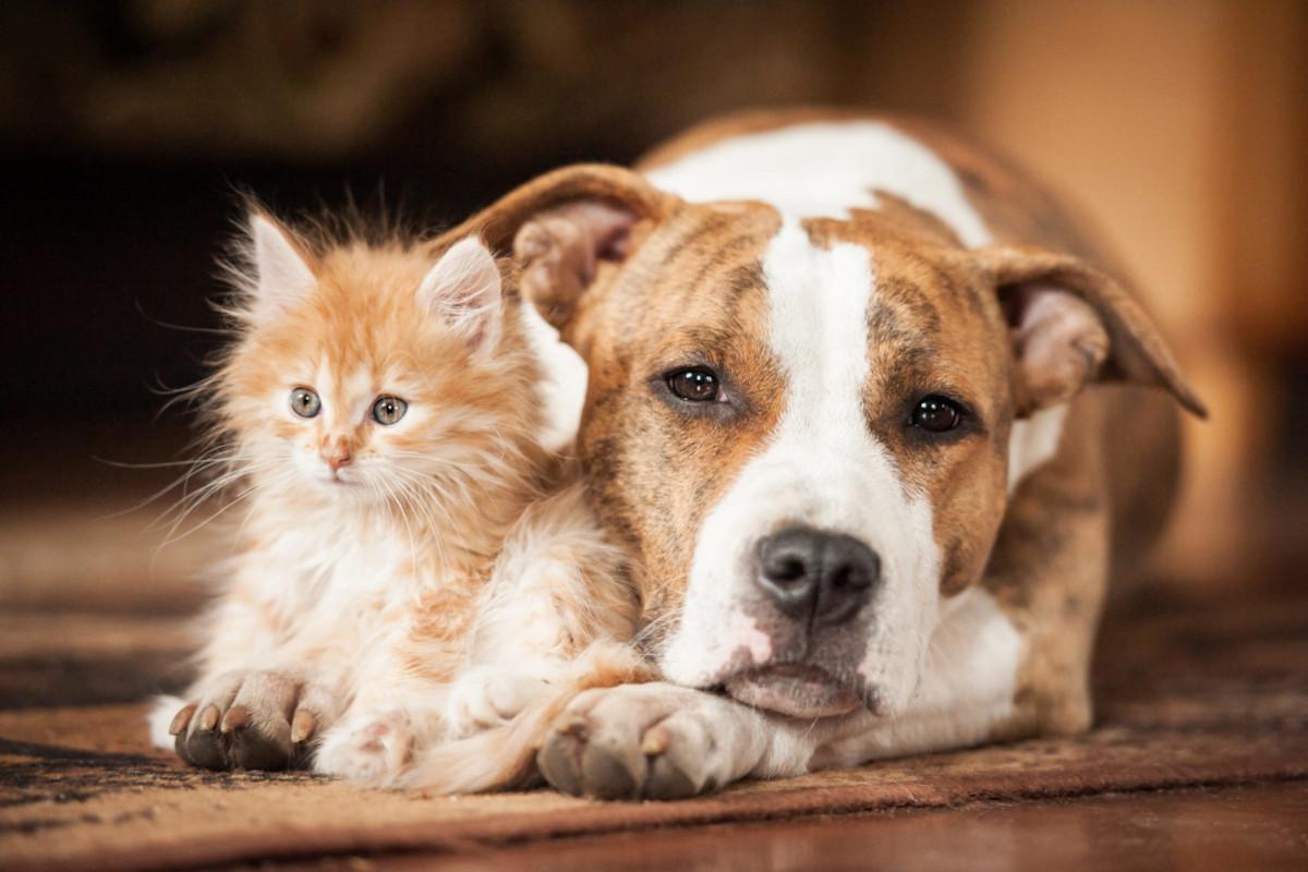 Cane e gatto, veterinari italiani cure salva vita